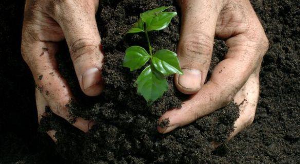 Fertilizers-Suppliers-Dubai